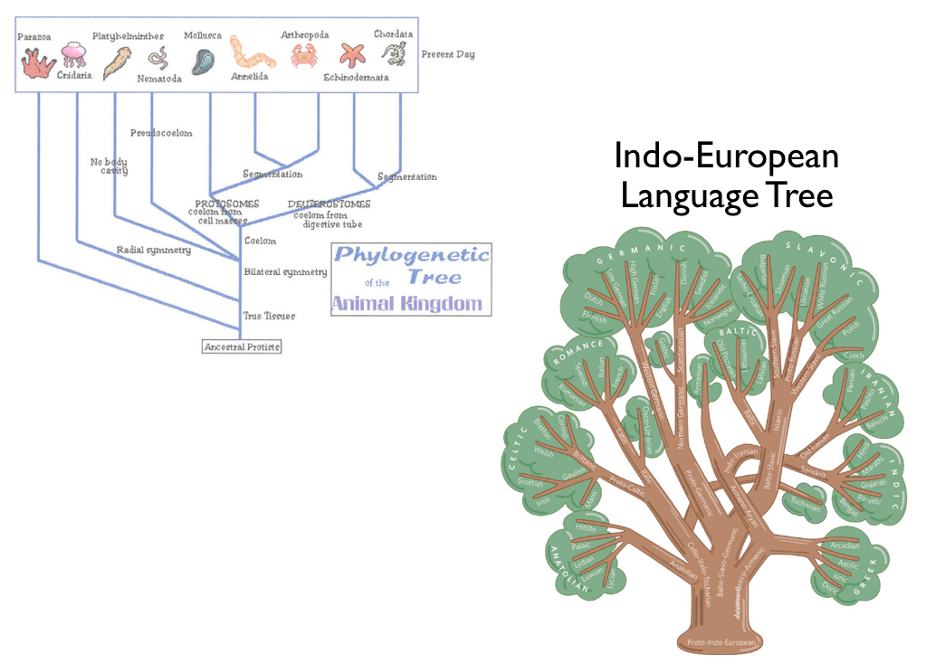 Linguistic Phylogenies Are Not The Same As Biological